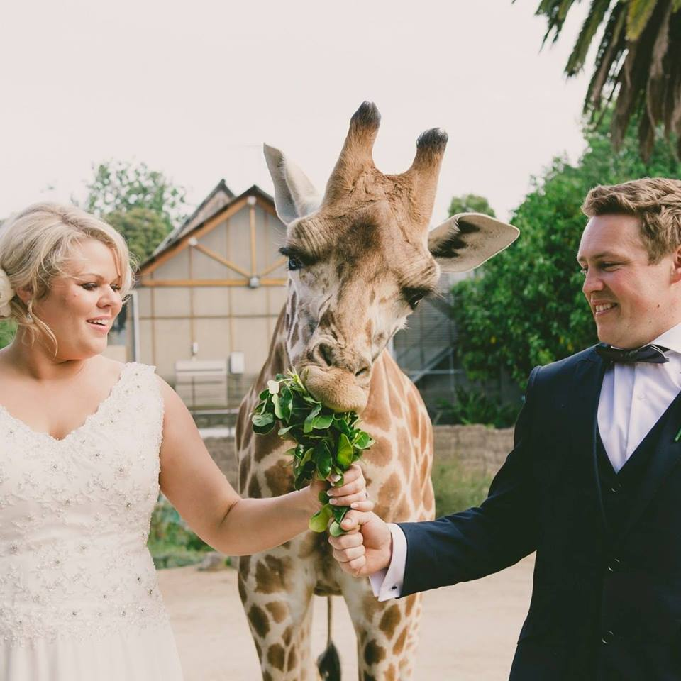 Melbourne Zoo Weddings