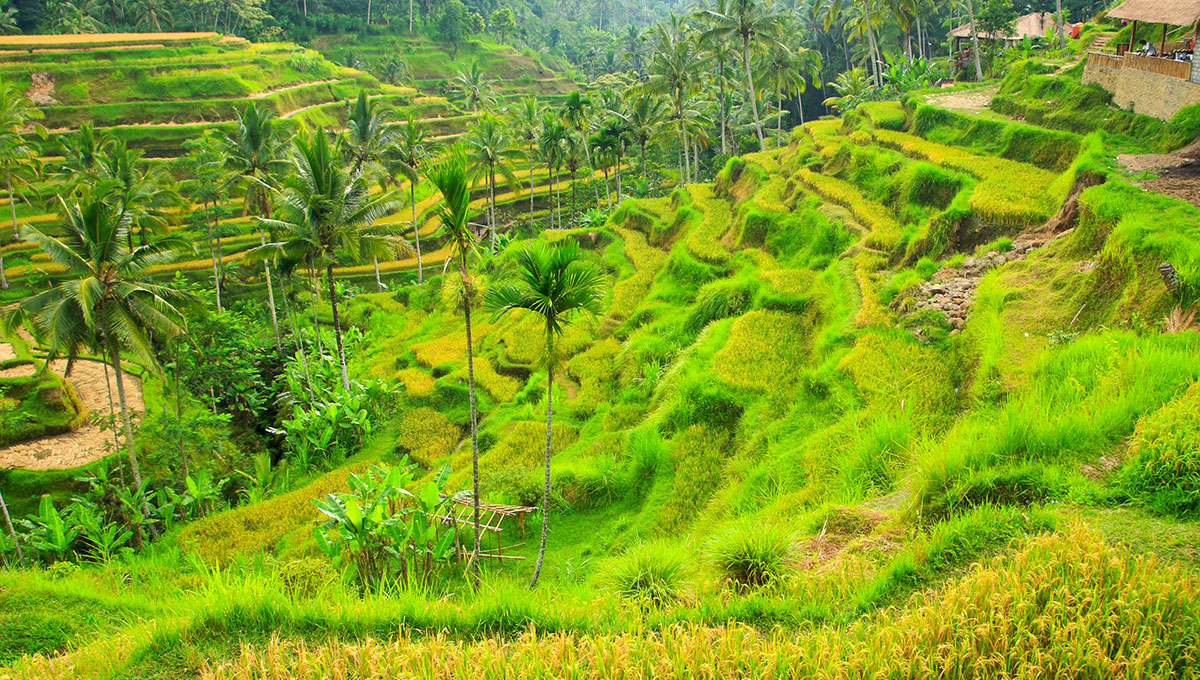 WEB-ricefields-ubud-bali-wedding